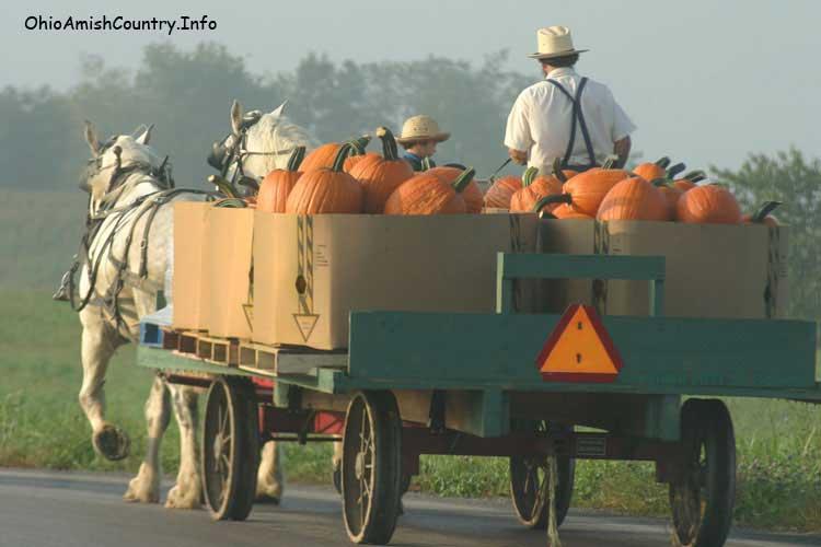 An Amish Farmer taking produce to market.